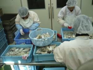 ⑱本田水産 牡蠣の殻洗い